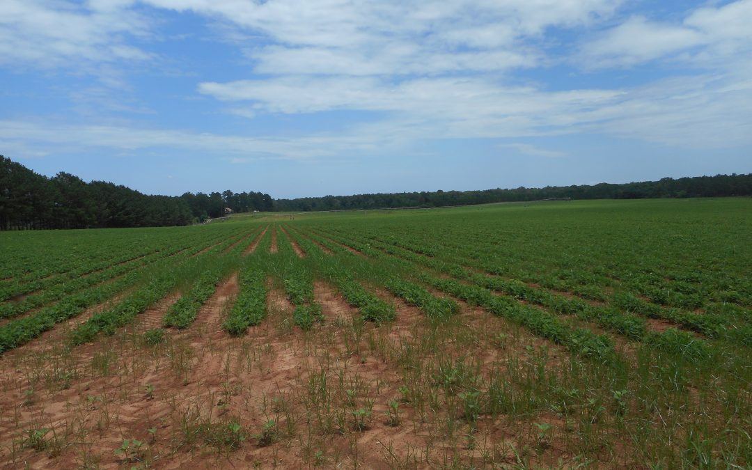 Early County – 493 Acres