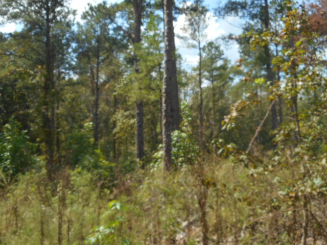 Stewart County – 174 Acres – Excellent Deer Hunting