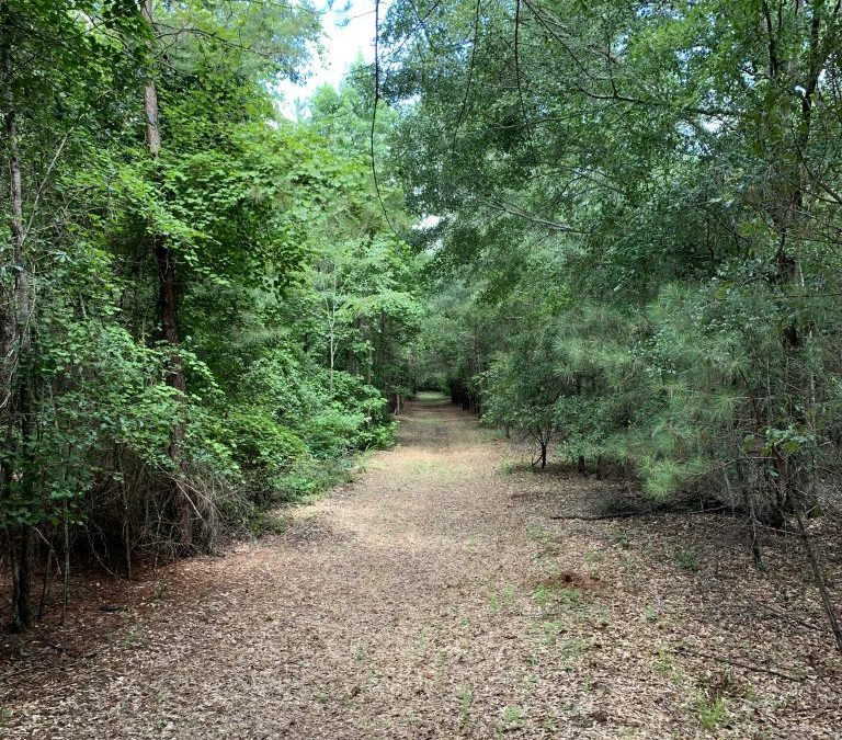 Sumter County 267 Acres-Recreational Tract